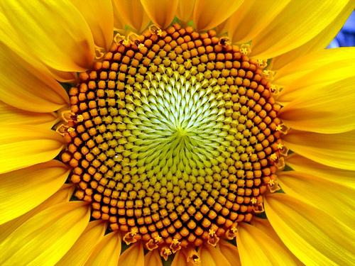 http://www.cs.ucsb.edu/~cappello/resources/fibonacci/359335040_893d6bf987.jpg